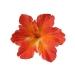 Hiuskoriste, DEBRA Hibiscus Orange