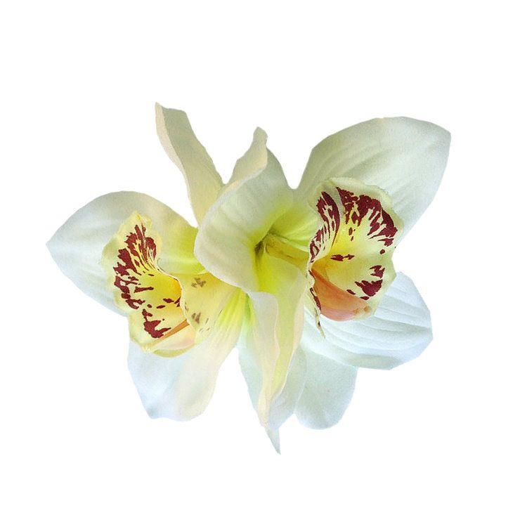 Hiuskoriste, GINGER Double Cream Orchid