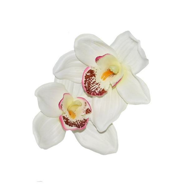 LADY LUCK'S, MALINA Double Orchid