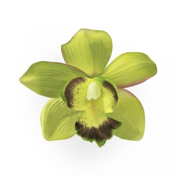 Hiuskukka, ORCHID Green