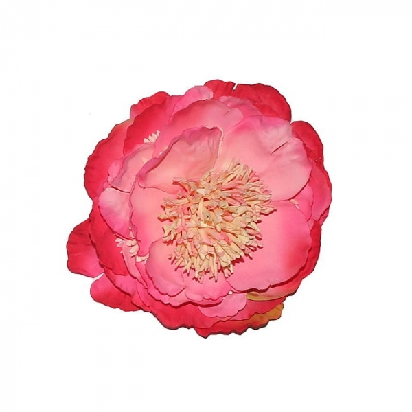 LADY LUCK'S, PEONY Coral